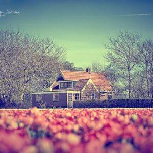 Hotel Bungalow Callantsoog in 't Zand