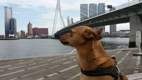 van Berk en Hout in Rotterdam